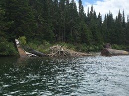 July 18 Beaver lodge built on an old wreck in Quebec Harbour