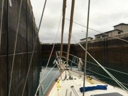 July 24 Gaviidae Locking Down