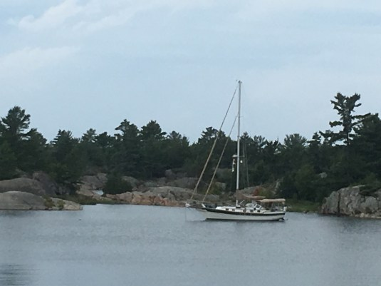 August 20 Gaviidae tucked into Fox Harbour