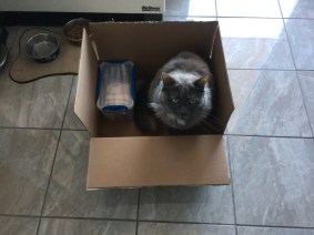 April 17 Again Echo is in a box I'm trying to pack!