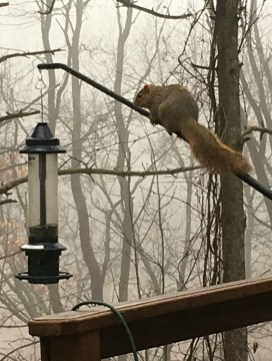 Feb 24 Giant Fox Squirrel