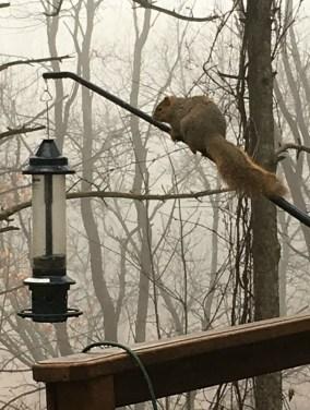 Feb 24 Giant Fox Squirrel