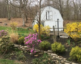 April 25 Roxbury CT Housesit - Arrival of Spring