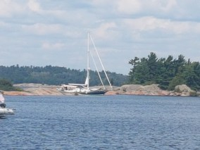 August 15 Gaviidae coming through the Benjamin Cut - Photo by Steve Rose