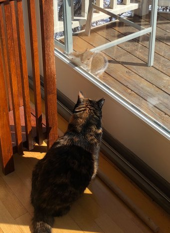Mar 8 Karo facing off with a squirrel