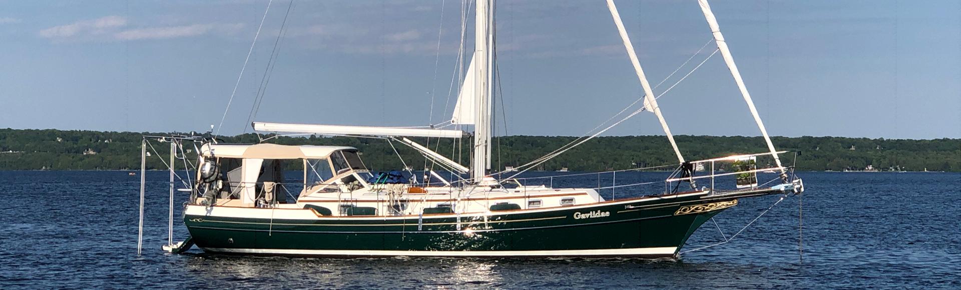 Gaviidae Sails