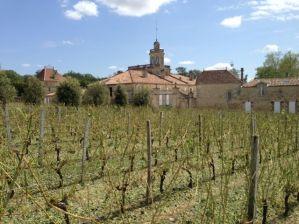 Ch Bonnet, vines laid bare
