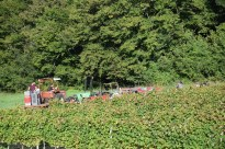Three tractors are required for the trips to the winery