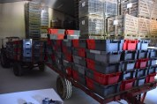 Excess crates left in the cool cellar, awaiting the press