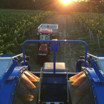 2015-Bauduc-start-of-red-harvest-09