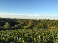 2015-Bauduc-start-of-red-harvest-10