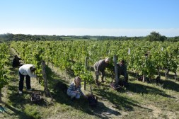 2015-Bauduc-start-of-red-harvest-14