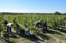 2015-Bauduc-start-of-red-harvest-14