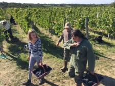 2015-Bauduc-start-of-red-harvest-17