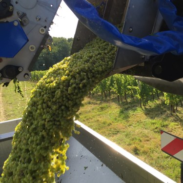 2015-Bauduc-white-harvest-21