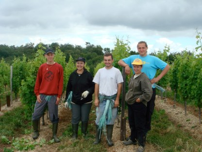 The team taking care of the vines in 2007.