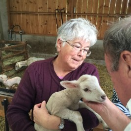 Madame with her Pauillac lambs in the Médoc. David enchanted.