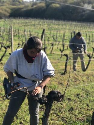 Tying the vines