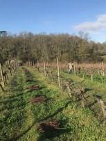 Tirages des bois - pulling out old wood