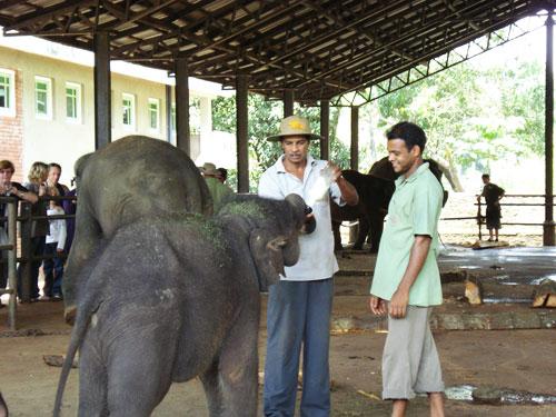 Feeding Milk To A Baby Elephant