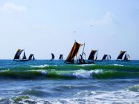 Negombo, Sri Lanka Attractions: Negombo Fishing Boats