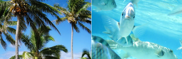 Island Honeymoons