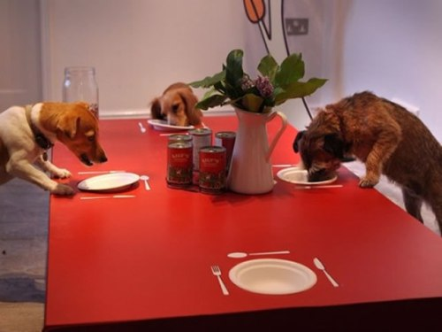 Dogs Enjoying A Meal At Lily's Kitchen   (c) Photo By Peter Macdiarmid, Getty Images