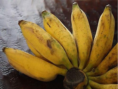 Types of Bananas: Burro Banana