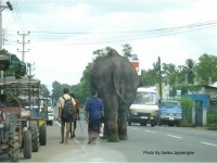 Elephant on the side of road