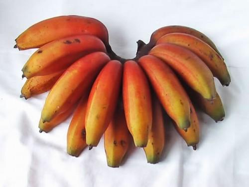 Types of Bananas: Red Banana