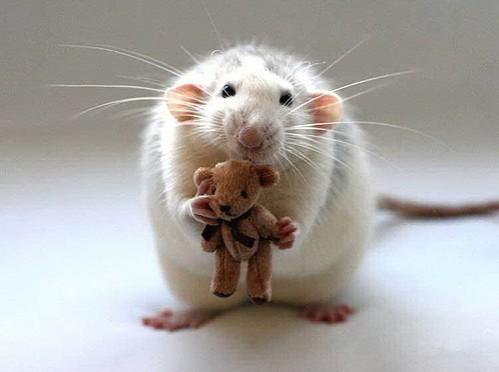 Rato e Ursinho