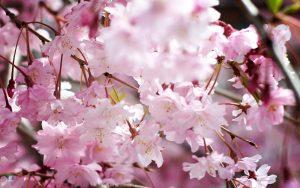 Spring-Blooming