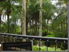 a view from our balcony breakfree noosa (9)