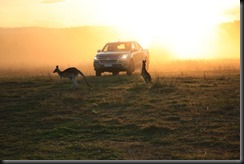 Colorado sunset kangaroo (2)