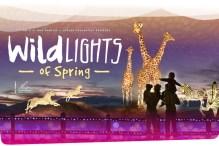 Wildlights of Spring 2021