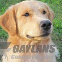 View Gaylan's Finnegan's Rainbow MX MXJ OF NAC O-NJC TNN CGC