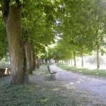 bench-path