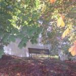 bench-trees