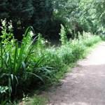 path-River-Wey-059