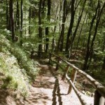 stairs-forest