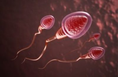 sperm at a glance