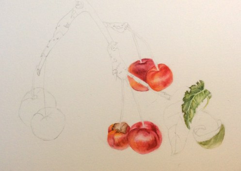 crab apple Red Sentinel - watercolour