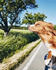 Jak transportować zwierzęta?