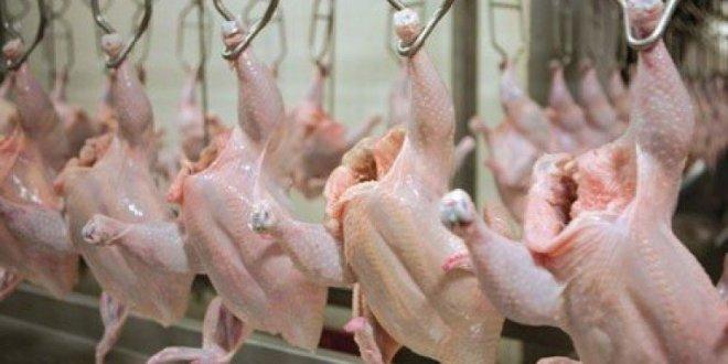 """الزراعة تؤكد على السماح بادخال """"الدجاج المبرد"""""""
