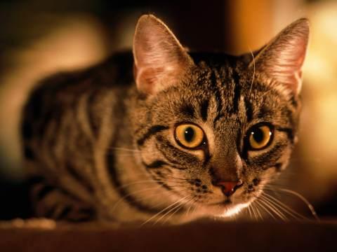 1800x1200_is_my_cat_normal_slideshow