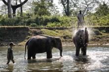 Fillerin eğlenceli banyosu