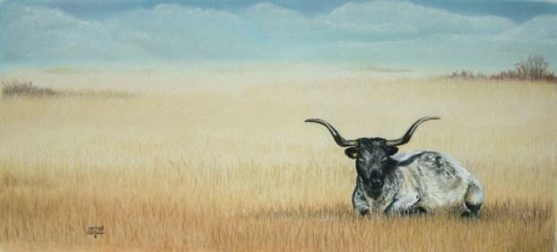 Lone Steer - Soft Pastel