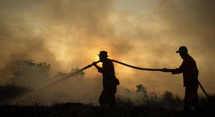 После коронавируса мир ждут потоп засуха голод и библейское нашествие саранчи
