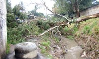 Chuva e vento derrubam árvores no Pinheirinho