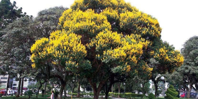 As flores do verão de Curitiba
